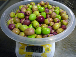 収穫したオリーブの実 約500g