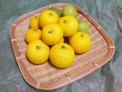 家で収穫したユズとまだ青いレモン