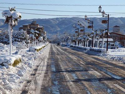 雪景色のヤシ並木 鳥取県羽合温泉にて