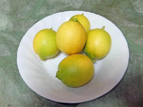 レモンを収穫 5個