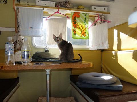 キャンピングカー デイブレイク タオル掛け 改造 猫 シンガプーラ