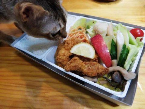 小淵沢 高原野菜とカツの弁当