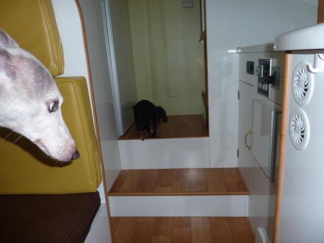キャンピングカー デイブレイク ダイネット 犬ウィペット ダックスフント コーキング
