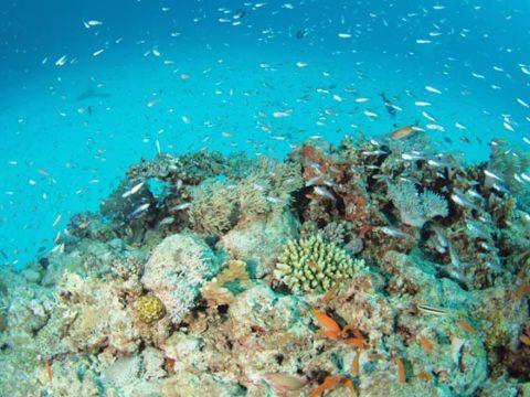 阿嘉ニシバマの水中 サンゴと魚がたくさん