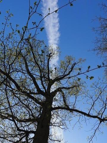 オランダで見た飛行機雲