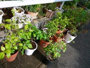 garden-20131110-1