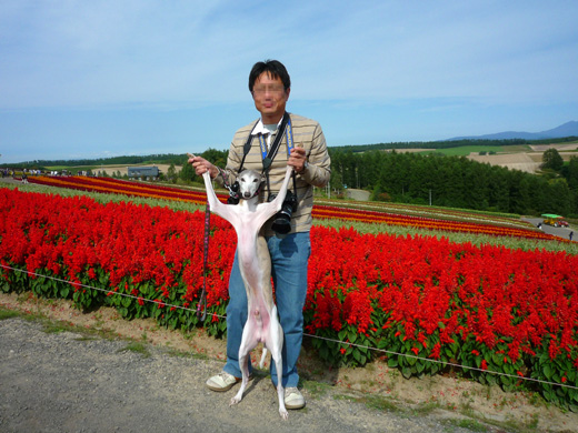 北海道富良野の花畑で2足立ちするグレイ宇宙人(ウィペット)