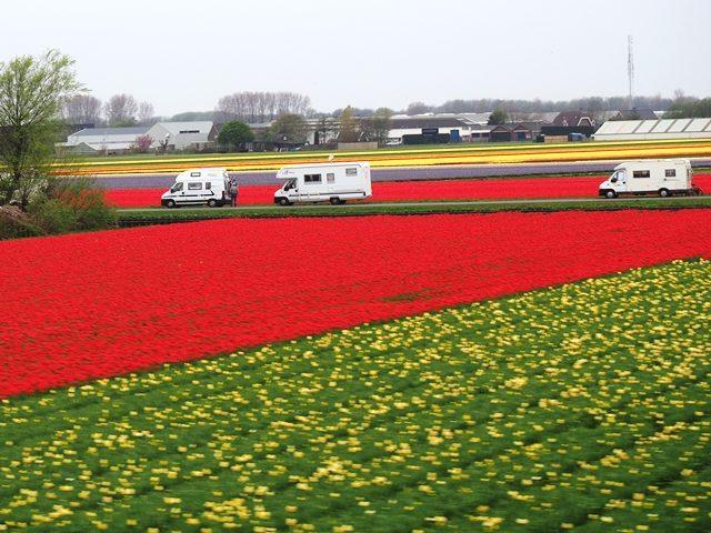 オランダで見たキャンピングカー チューリップ畑