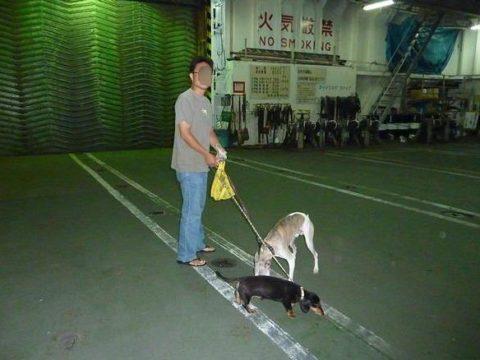 太平洋フェリー車内残置犬車両デッキ散歩