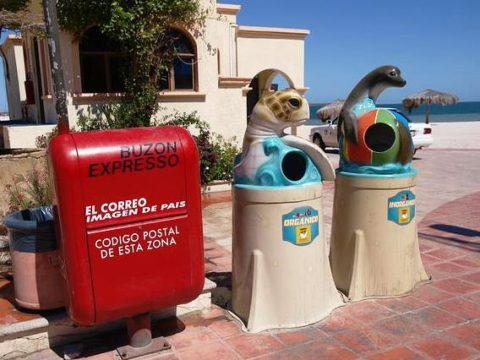 メキシコのゴミ箱 アシカとウミガメ
