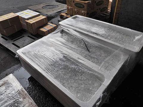築地市場氷詰めされたマグロ