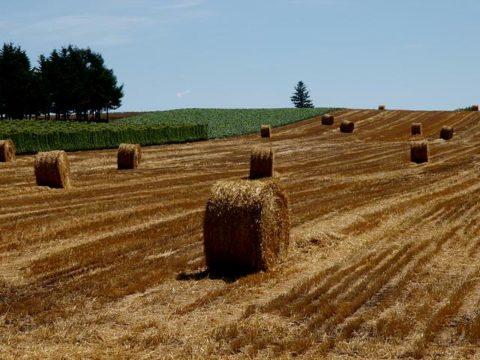 北海道田園風景牧草刈取り