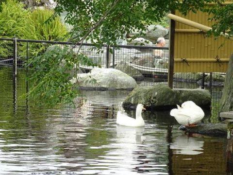 八扇の湯、池からの眺め