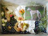 好きだった玩具や在りし日の姿とともに棺に眠るペッパー(クリックで拡大)