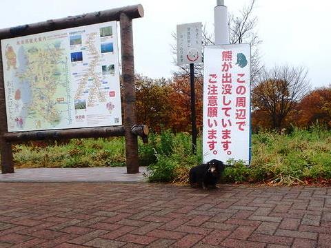 秋田自動車道錦秋湖サービスエリア熊注意の看板とミニチュアダックスフンのジンジャー