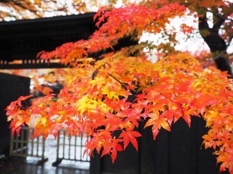 キャンピングカーで行った秋田県角館武家屋敷の紅葉