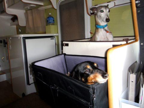 カムロードデイブレイクの車内、移動中の犬の居場所にダックスフントとウィペットが座っています
