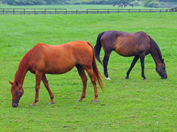 新冠サラブレッド銀座にある牧場に放牧されていた馬2頭の画像