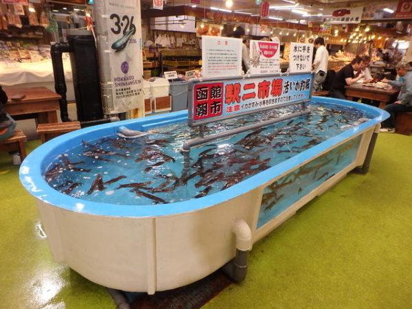 函館朝市のイカ釣り