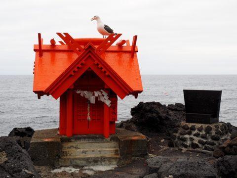 利尻島北のいつくしま弁天宮の祠にいたウミネコ