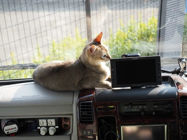 キャブコン、キャンピングカー、デイブレイクのダッシュボードで寛ぐ猫