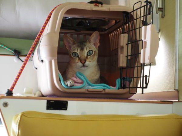 キャンピングカーのネコ用ケージとシンガプーラのフィグ