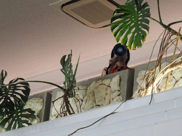 石垣空港で搭乗案内をするグランドスタッフ