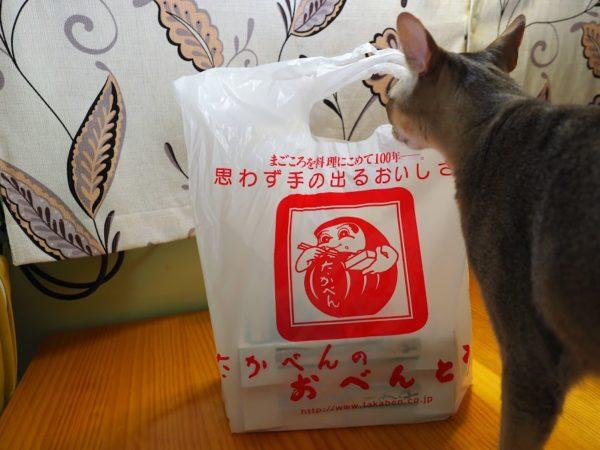 横川SAで買ったたかべんの駅弁を狙う猫(シンガプーラ)