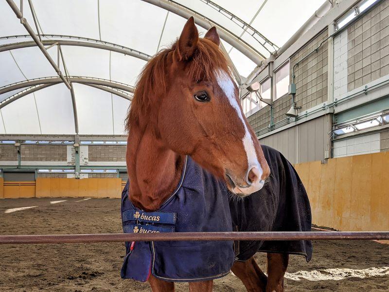 群馬県馬事公苑の馬