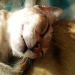 シンガプーラのフィグお昼寝
