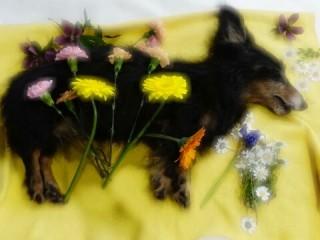 ダックスフントのジンジャーの遺体と庭の花