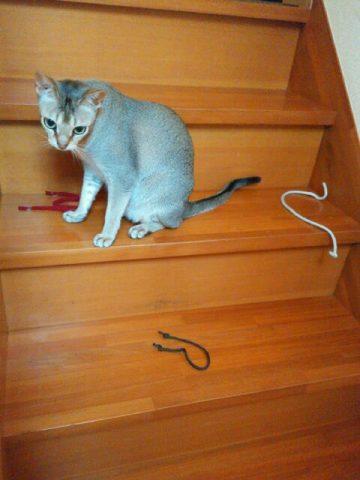 会談のところどころに紐を散らかすシンガプーラのフィグ