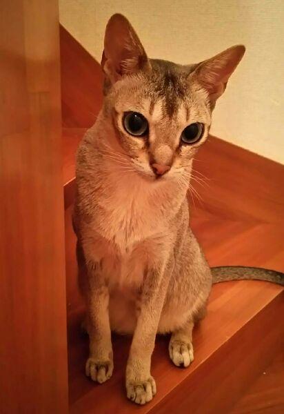 階段から下を見下ろすシンガプーラのフィグ、満3歳