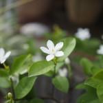花(秋の庭)