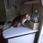 未知の世界を覗くネコ